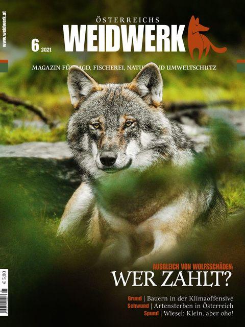 WEIDWERK Ausgabe 06/2021
